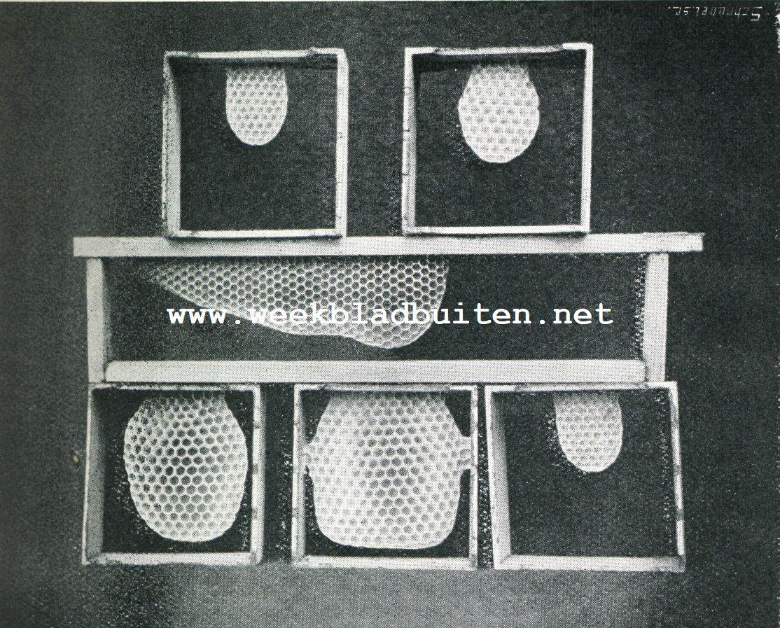 BEGIN VAN WASBOUW. (In raampjes met kleine stukjes voorbouw). Het middelste raampje is uit een lage honingopzet en vertoont meest werkbij en alleen in 't midden onderaan wat darrencellen. Van de bovenste raampjes vertoont het rechtsche, van de onderste de twee linksche darrenbouw. De vierkante raampjes zijn