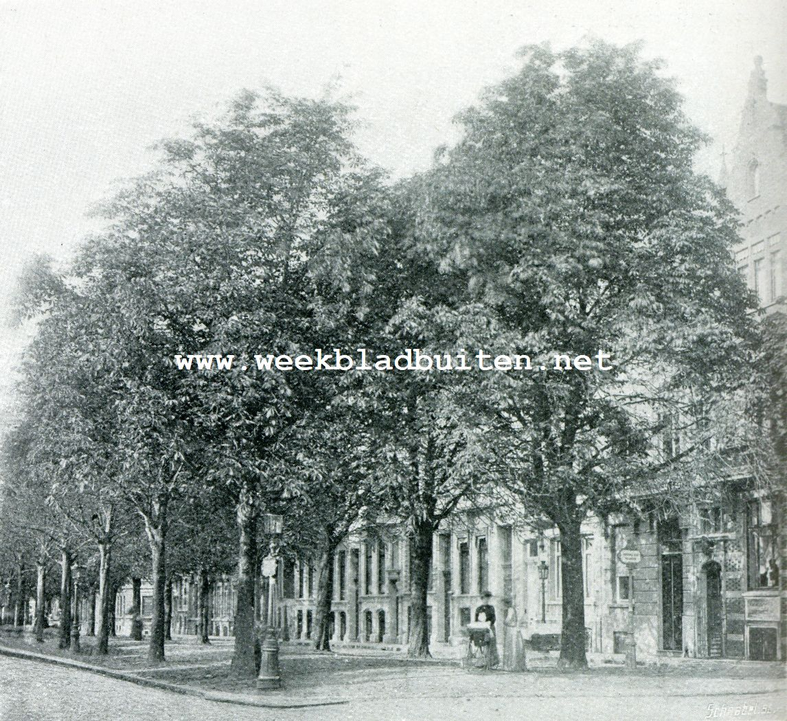 Bemeste boomen op 30 October 1901 van de Avenue Louise te Brussel