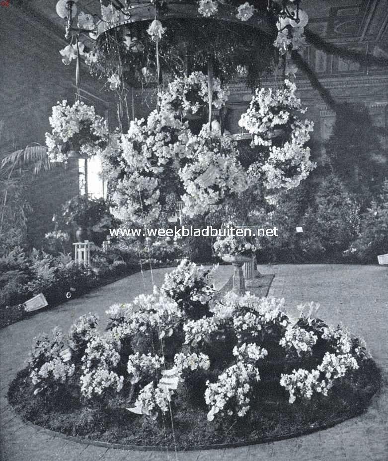 De hangende begonia's op de kerstmis-keuring van de Nederlandsche Maatschappij voor Tuinbouw- en Plantkunde in de zalen van
