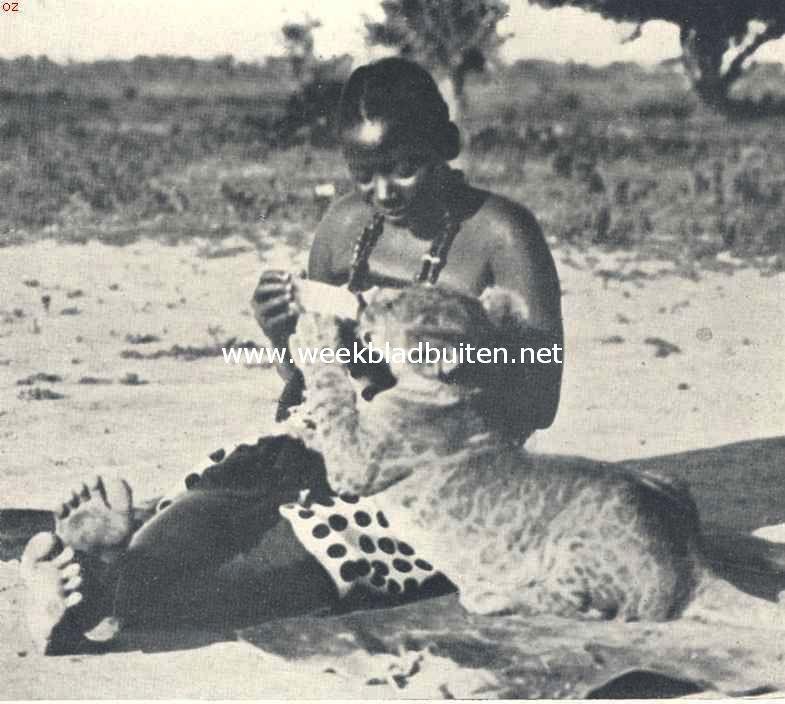 De bewoners van Oost-Afrika. Een leeuwtje van drie maanden, uit de flesch drinkend